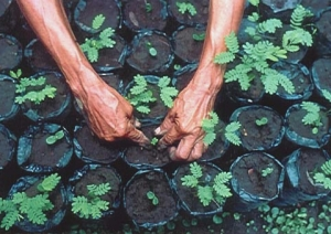 Hands Planting Trees
