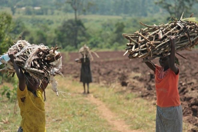 Gathering firewoos in Uganda