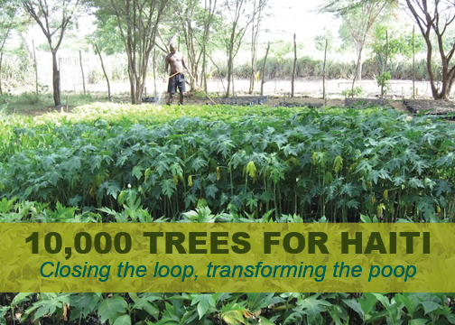 trees for Haiti