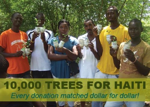 reforest Haiti