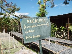 Nicaragua reforestation