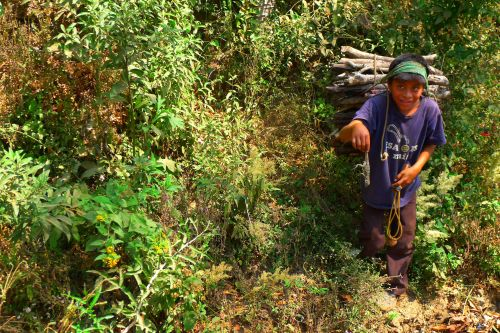 gathering fuelwood guatemala