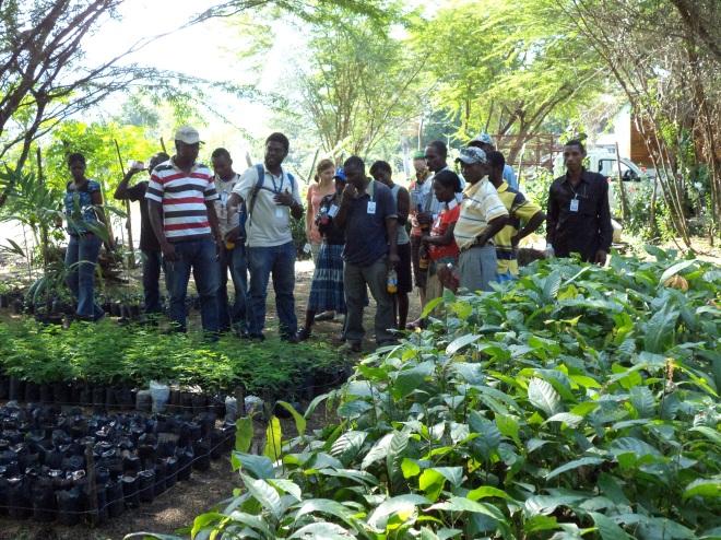 tree nursery Haiti