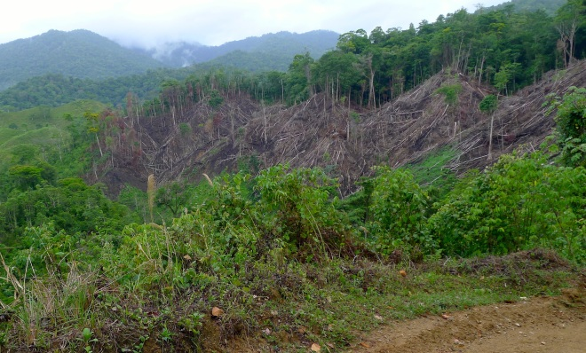 clear cutting Honduras