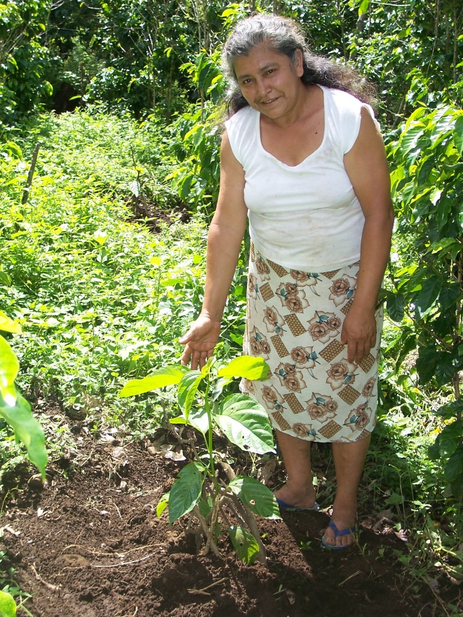 community tree planting central america