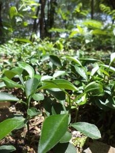 SOIL tree nursery Haiti