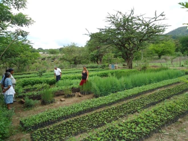 guatemala tree nursery