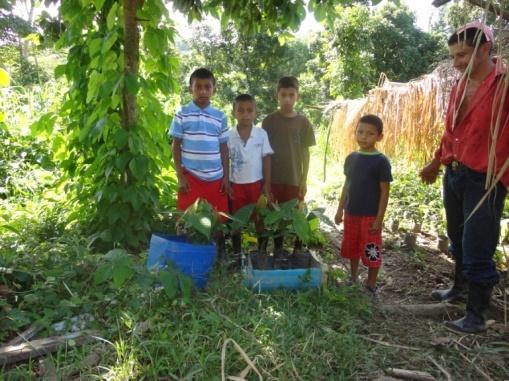 boys help plant cacao trees