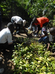 Exchange of tree nursery techniques, Hatte-Dimanche