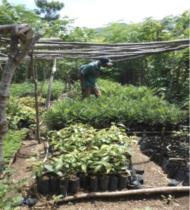 Rivier Forad tree nursery