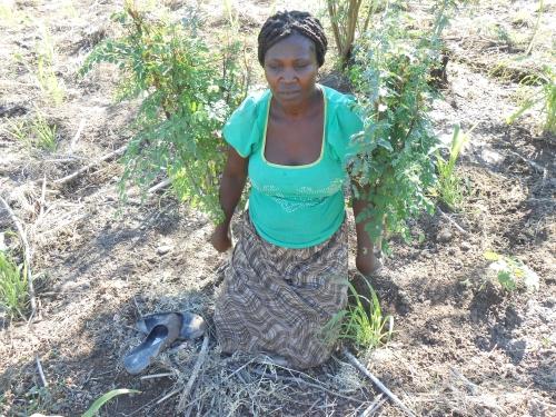 A SHG member plants Moringa trees