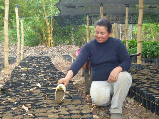 Doña Tania Alarcón auxiliar de viverista llenando con sustrato las bolsas en el nuevo Vivero Marzo 2014