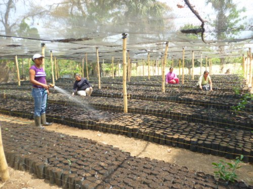 new tree nursery_El Porvenir El Salvador