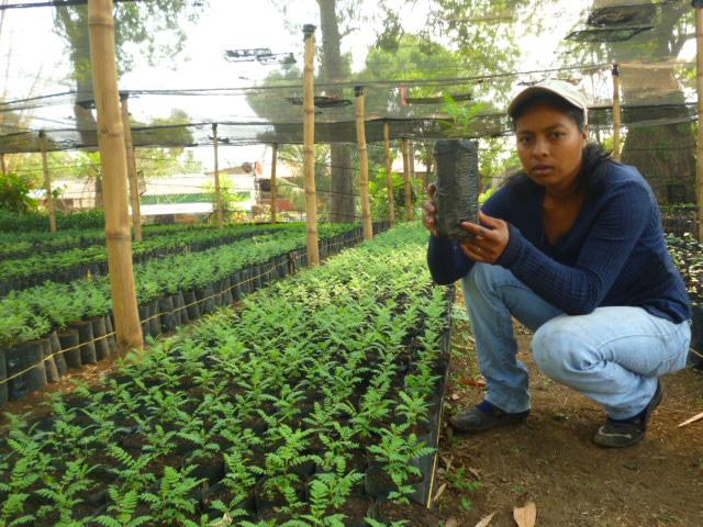 Zoila Viverista, mostrando un Chaquiro con 18 días de germinación