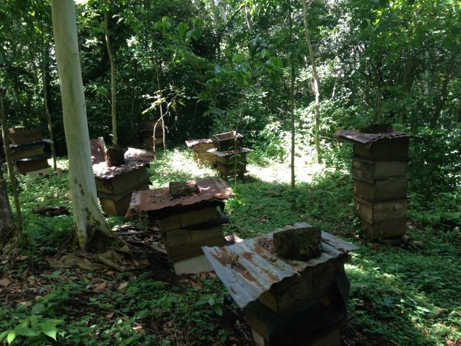 Guatemalan apiculture