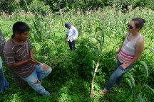 Guatemala permaculture