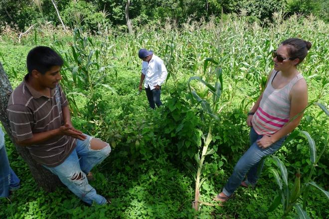Guatemala permaculture
