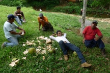 Guatemala coconuts