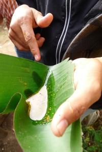 Guatemalan honey