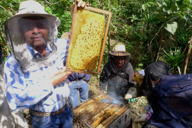 Guatemala apiculture workshop