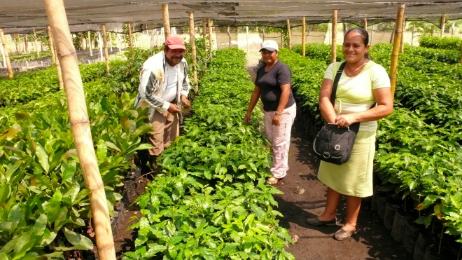 El Salvador tree nursery