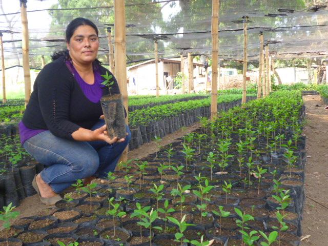 Allegro's support keeps local, community-led tree nurseries thriving.