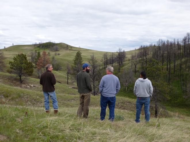 Pine Ridge reforestation project