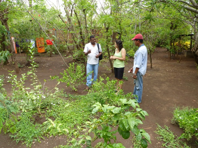 Nicaraguan Center for Forests, Energy and Climate