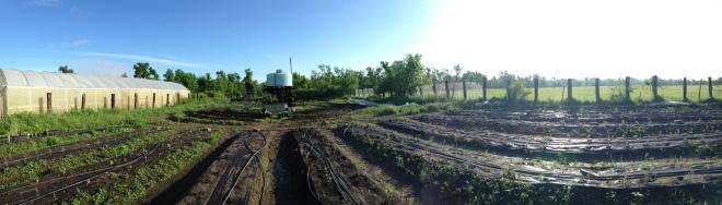 Solar Warrior Farm