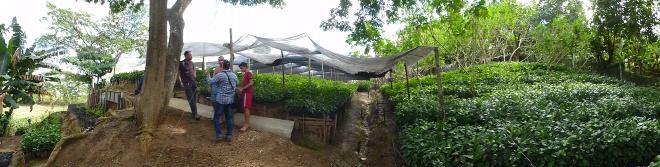 Cuban plant nursery